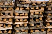wood burning effects on forests