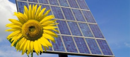 solar panel and sunflower