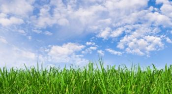 sunny-sky-and-grass